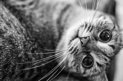 A lazy cat. This cat likes a work Royalty Free Stock Photo