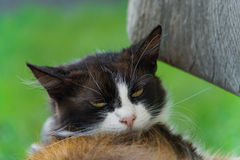Lazy cat look Stock Photo