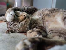 Lazy Cat Lying on Royalty Free Stock Photos