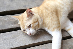 Lazy cat lying down on the wooden floor - Soft focus Royalty Free Stock Images