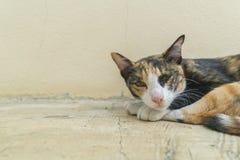 Lazy cat lying sleepy on ground.  Royalty Free Stock Image