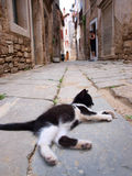 Lazy cat lying on street Stock Photo