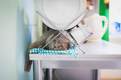 Lazy cat lying under the dish drainer. In the kitchen Stock Images