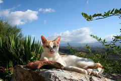 Lazy cat in mystras. Historic mystras in peloponnese - greece Royalty Free Stock Photography