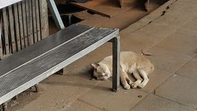 Lazy cat napping under the bench.  Royalty Free Stock Photography