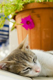 Lazy cat at the old city of Naxos island in Greece Royalty Free Stock Photo