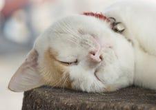 Lazy cat Stock Photo