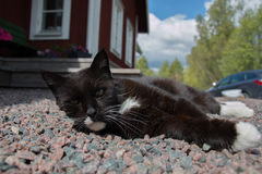 Lazy cat. Relaxing in the drive way stock photo