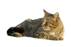 Lazy cat resting. In the sun royalty free stock photography