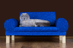 Lazy cat is resting on the couch Stock Image