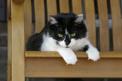 Lazy cat resting in a rocking chair. Lazy black and white cat resting in a porch side rocking chair royalty free stock image