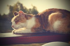 Lazy cat resting. On a wooden bench, instagram effect Stock Image