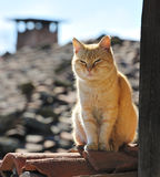Lazy cat on roof. Lazy yellow cat sleeping on roof of rural house Stock Photos
