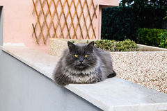 Lazy cat sat on a wall Royalty Free Stock Images