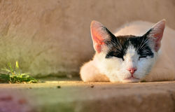Lazy cat Stock Photos