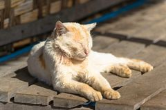 Lazy cat. A lazy cat is sitting in the sunshine Royalty Free Stock Photos