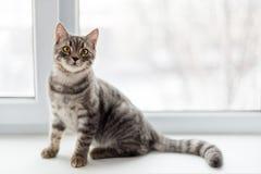 Lazy cat sitting on windowsill. Selective focus. Stock Photos