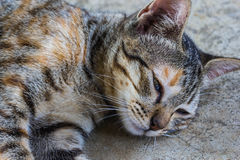 Lazy  cat sleep on the floor. A lazy  cat sleep on the floor Royalty Free Stock Image