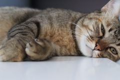 The lazy cat is sleeping on the bed royalty free stock photo