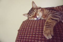 Lazy cat sleeping Stock Photo