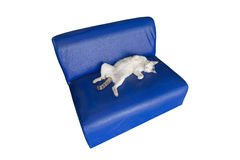 Lazy cat sleeping, lying on sofa. Royalty Free Stock Photo