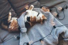 Lazy cat sleeping on woolen sweater Royalty Free Stock Photos