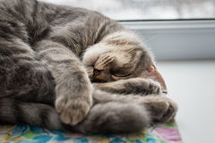 Lazy cat sleeping on windowsill. Selective focus. Royalty Free Stock Image