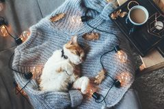 Lazy cat sleeping on woolen sweater. Lazy cat is sleeping on soft woolen sweater on sofa, decorated with led lights. Winter or autumn weekend concept, top view Stock Photos