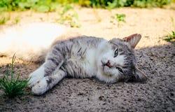 Lazy cat sleeps in the garden