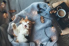 Lazy cat sleeping on woolen sweater Stock Images