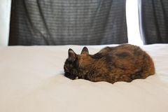 Lazy cat snoozes stock photography