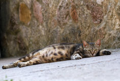 Lazy cat. Standing on asphalt abstract shot Stock Photos