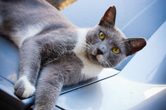 Lazy cat on the street Stock Photography