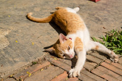 Lazy cat. The lazy cat is stretching itself Stock Photo