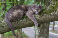 Lazy Cat at a Tree. Branch at Blurred Background Royalty Free Stock Image