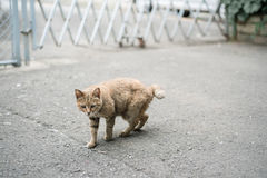 Lazy cat. Is walking around in the city Royalty Free Stock Image