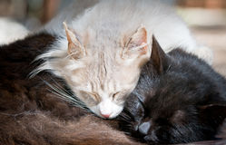 Two cats sleeping Stock Photo