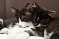 Lazy cats Stock Photography