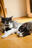 Lazy cats Royalty Free Stock Photo