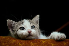 Lazy and curious kitten. Watching from his bed Stock Photo