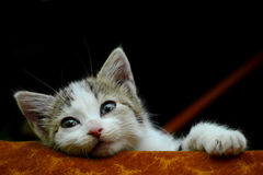 Lazy and curious kitten. Watching from his bed royalty free stock images