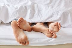 Lazy day concept. Wifes and husbands bare feet from white blanket. Female and male stay in bed, focus on legs, enjoy weekend and t. Ogetherness, sleep for long Royalty Free Stock Photography