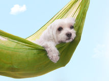 Lazy dazy dog days of summer. Cute dog siesta or lazing around under a beautiful summer sky stock images