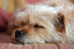 Lazy dog Royalty Free Stock Photography