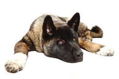 Lazy dog Stock Photo
