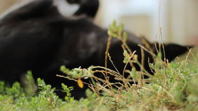 Lazy Dog. Adorable Dog Resting At garden stock footage