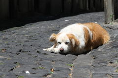 Lazy dog in Alfama, Lisbon, Portugal Stock Photo