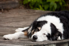 Lazy dog days of summer Stock Image