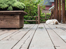 Lazy dog on a deck Royalty Free Stock Photos