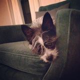 Lazy Dog. Enjoying a well deserved nap Stock Images
